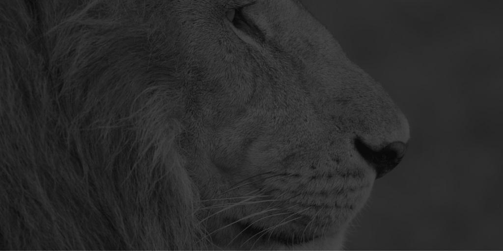 Armytage-Lion